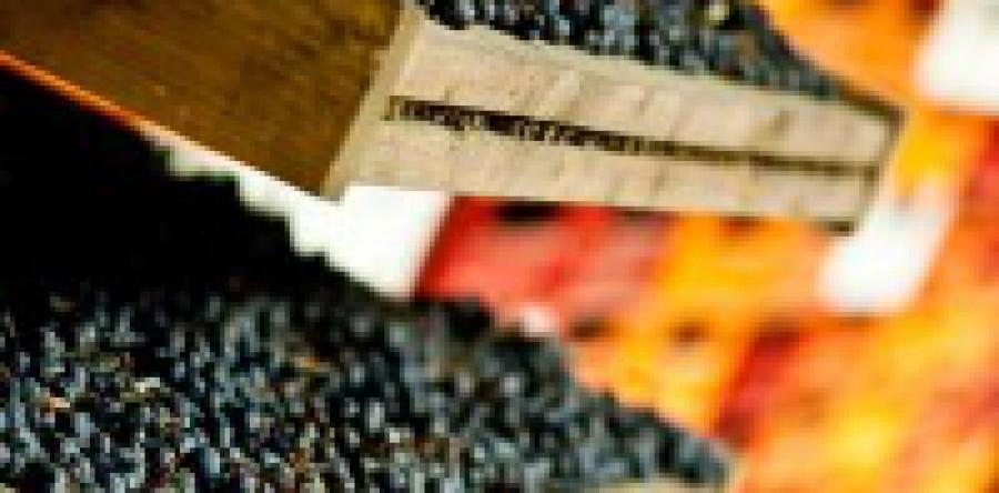 Rượu vang Amarone: Nho Khô Biến Thành Vàng
