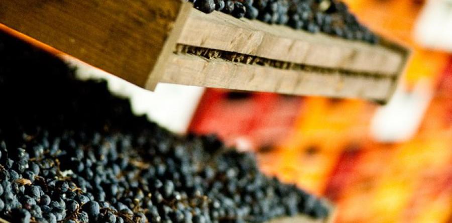 Phương pháp Appassimento trong rượu vang Ý là gì ?