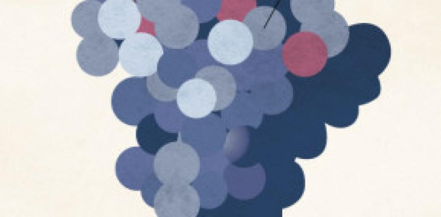 120 Mô tả Rượu Vang phổ biến nhất (Infographic)