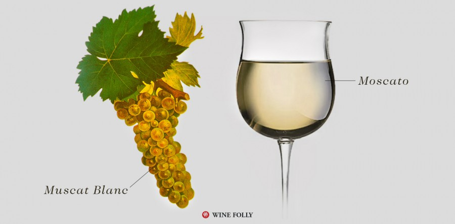 Tìm hiểu về rượu vang Moscato và 5 kiểu chính của nó