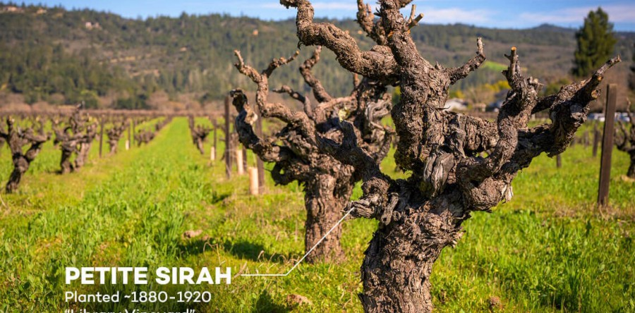 Tại sao rượu vang được làm từ gốc nho già lại đặc biệt