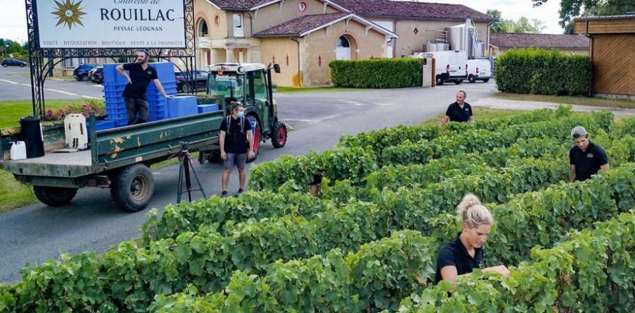 Mùa thu hoạch rượu vang trắng Bordeaux 2020 sớm bắt đầu